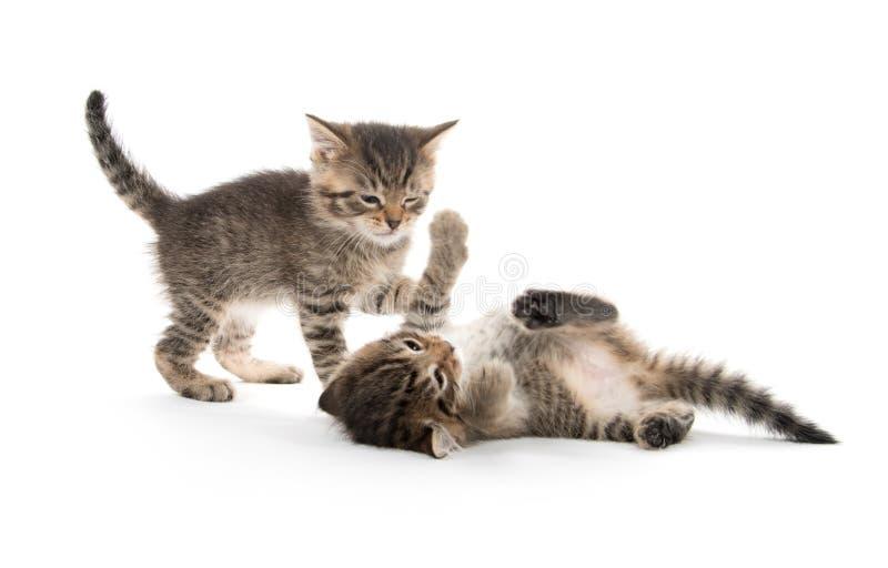 Dos gatitos que juegan en blanco fotografía de archivo