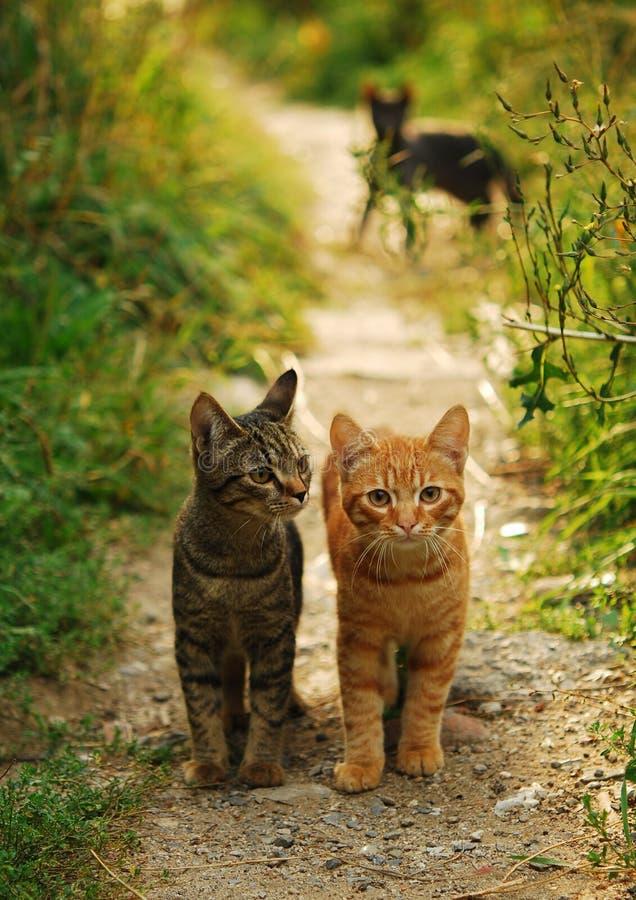 Dos gatos fotografía de archivo