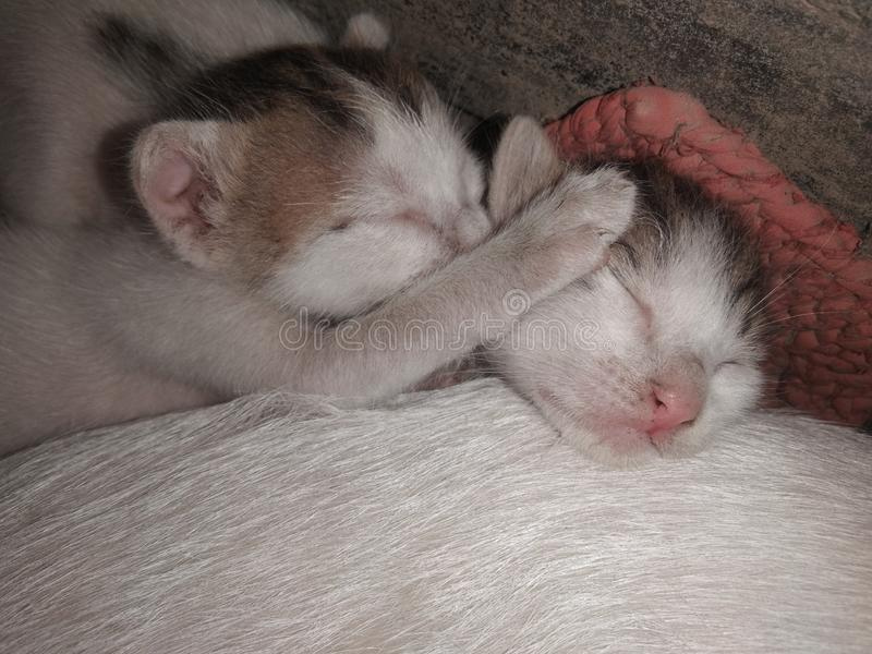 Dos gatos adorables lindos del bebé el dormir imagen de archivo