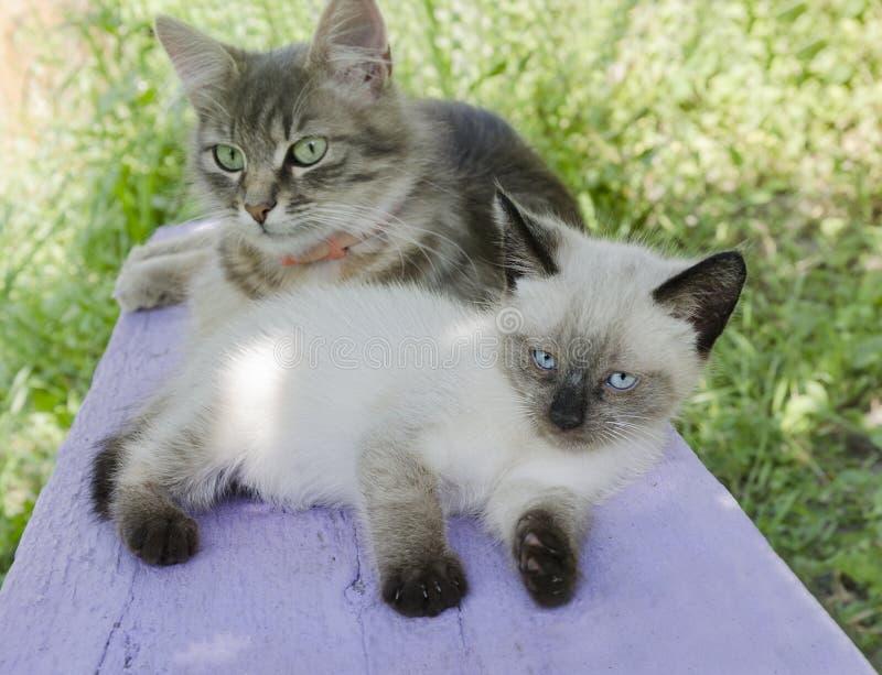Dos gatos adorables, poco gatito y mamá-gato imagen de archivo libre de regalías