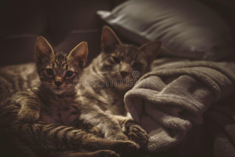 Dos gatos en el sofá imagenes de archivo