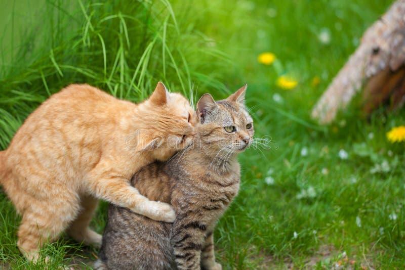 Dos gatos juguetones fotos de archivo
