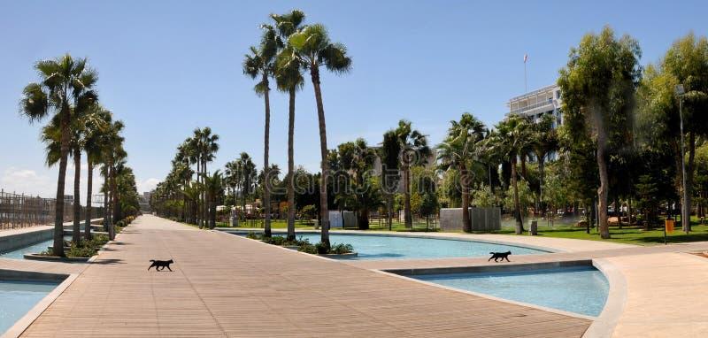 Dos gatos negros en la 'promenade' moderna - Limassol, Chipre fotos de archivo libres de regalías