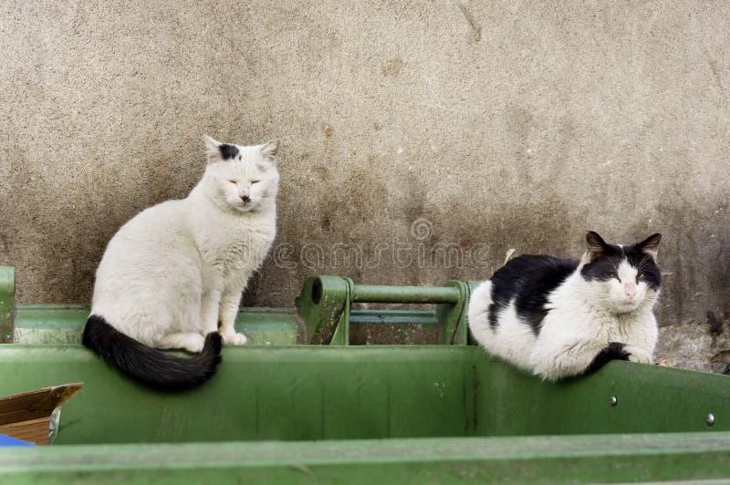 Dos gatos perdidos sucios que mienten en el envase asqueroso de la basura imagen de archivo libre de regalías
