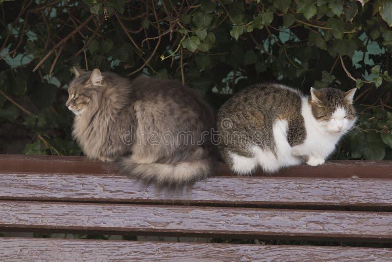 Dos gatos se están sentando en un banco en la calle imágenes de archivo libres de regalías