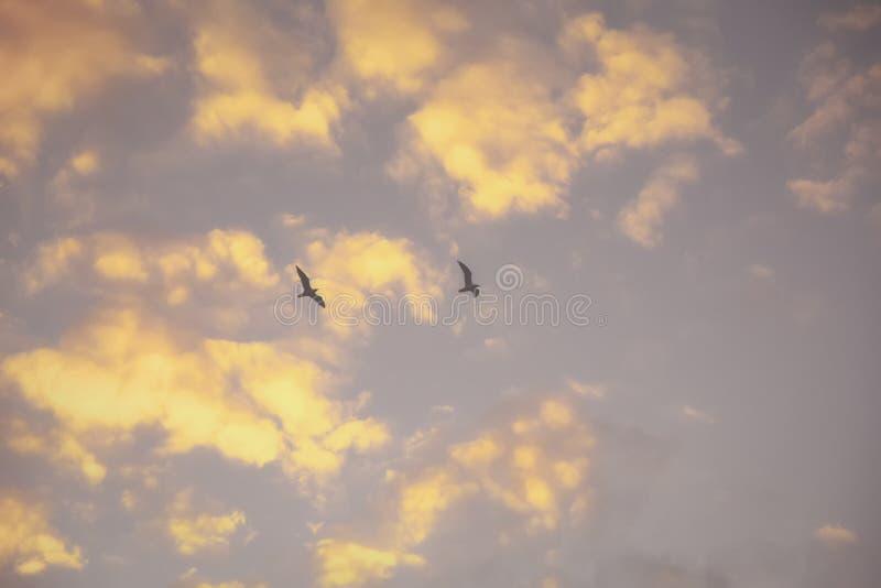 Dos gaviotas en el vuelo de la niebla contra el cielo de la tarde del otoño imagenes de archivo