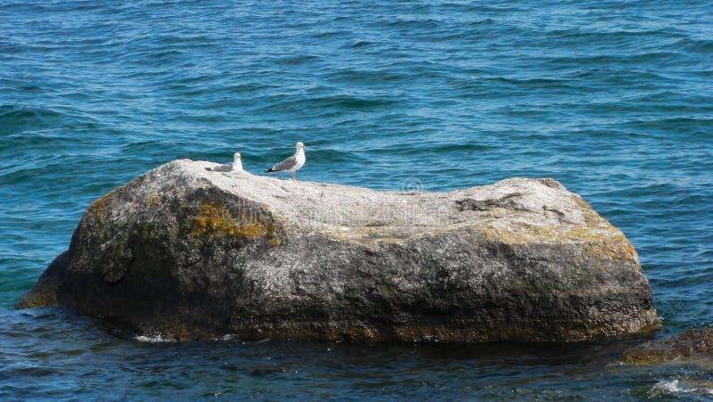 Dos gaviotas en la piedra fotos de archivo