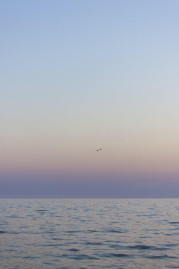 Dos gaviotas vuelan sobre el mar foto de archivo libre de regalías