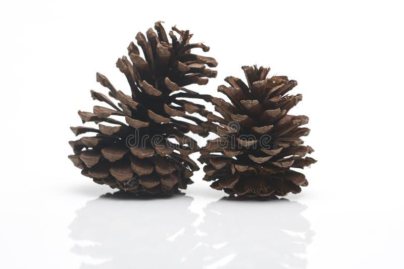 Dos grandes de conos del pino fotos de archivo