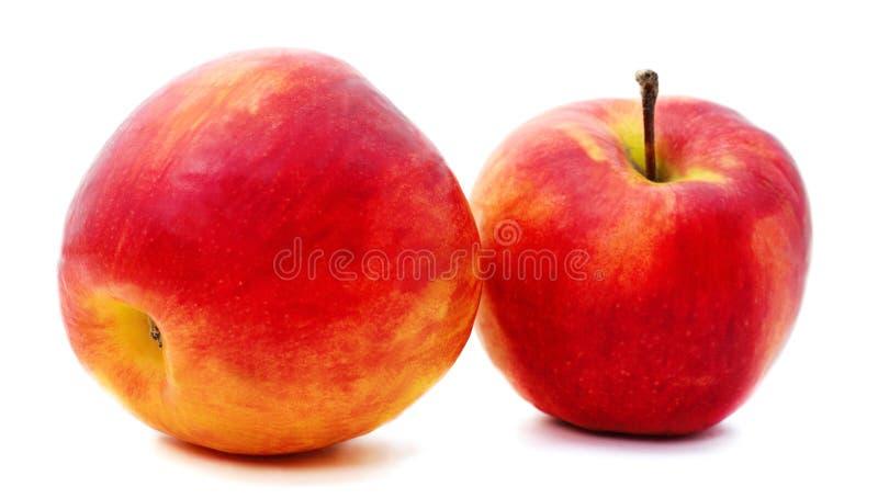 Dos grandes manzanas imagen de archivo libre de regalías