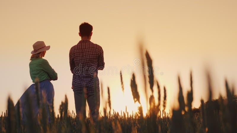 Dos granjeros hombre y situación de la mujer en un campo de trigo que mira la puesta del sol Baje el ángulo de visión imágenes de archivo libres de regalías