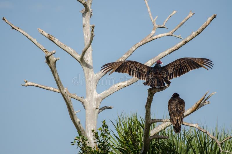 Dos halcones