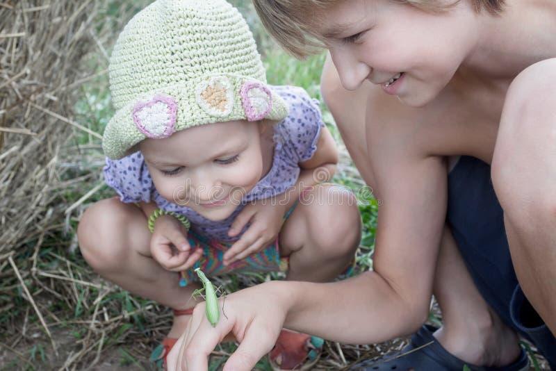 Dos hermanos que estudian mantis religiosas verdes en campo del verano imagen de archivo