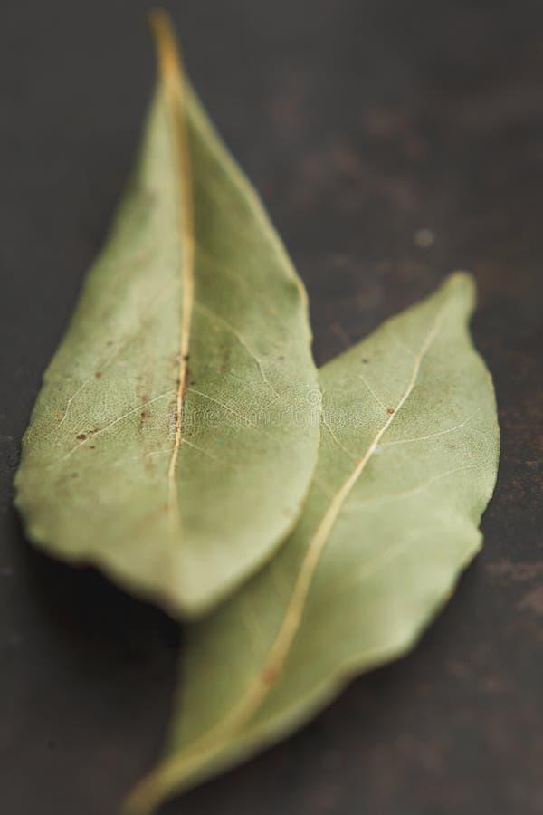 Dos hojas de la bahía en viejo backgound oscuro fotografía de archivo libre de regalías