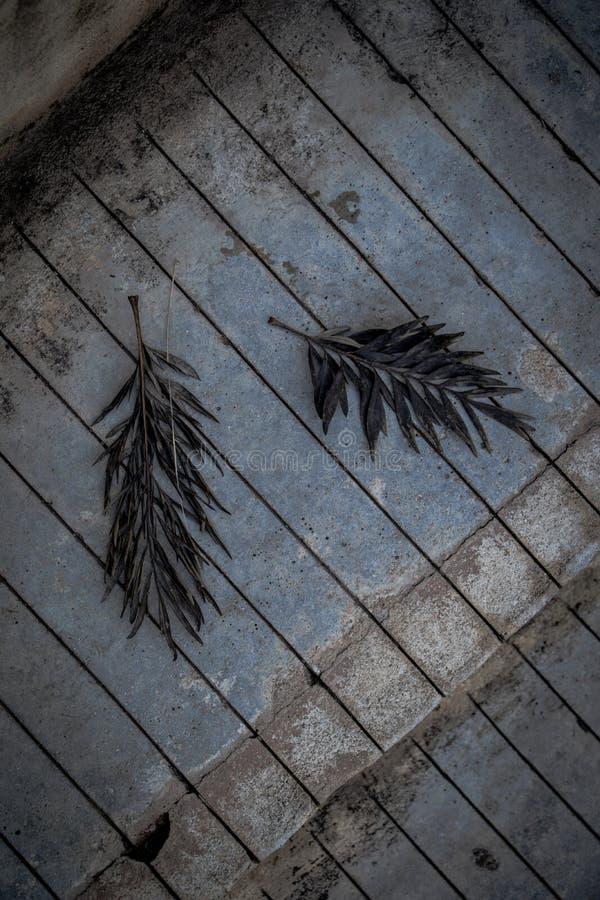 Dos hojas dejadas fotos de archivo