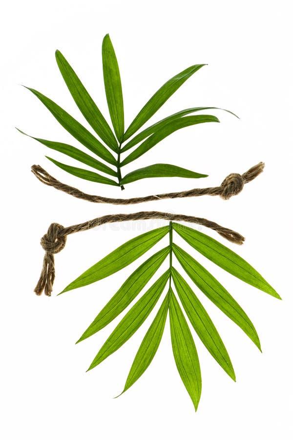 Dos hojas tropicales con los cordones fotos de archivo