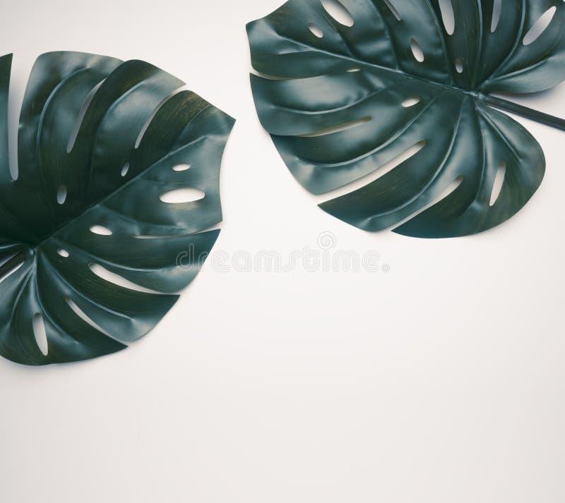 Dos hojas tropicales en el fondo blanco con el lugar para la endecha del plano del texto imagen de archivo libre de regalías