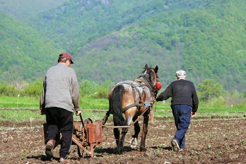 Dos hombres y un caballo que ara y que siembra fotos de archivo libres de regalías