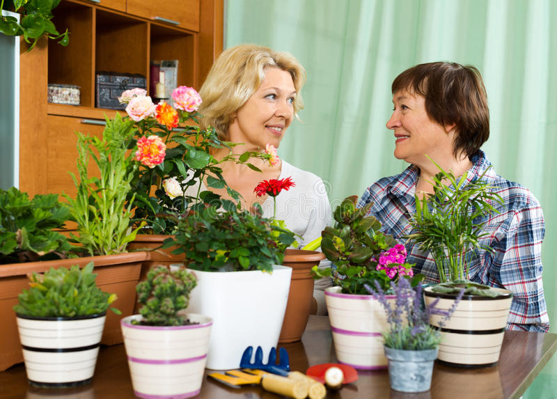 Dos housewifes mayores que toman el cuidado de plantas decorativas imagen de archivo