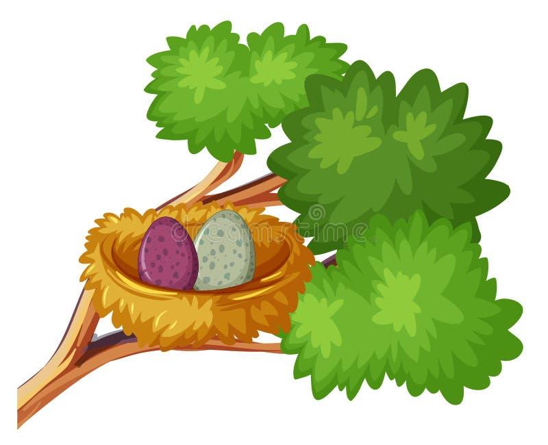 Dos huevos del pájaro en jerarquía libre illustration