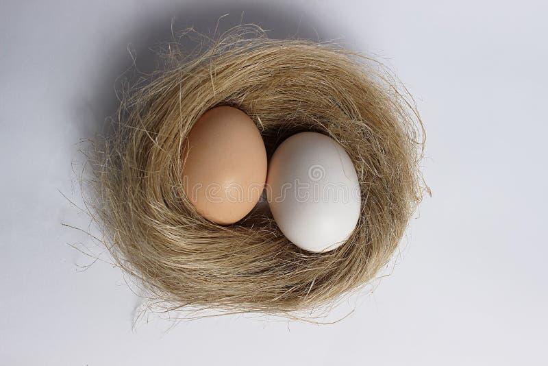 Dos huevos en la jerarquía foto de archivo