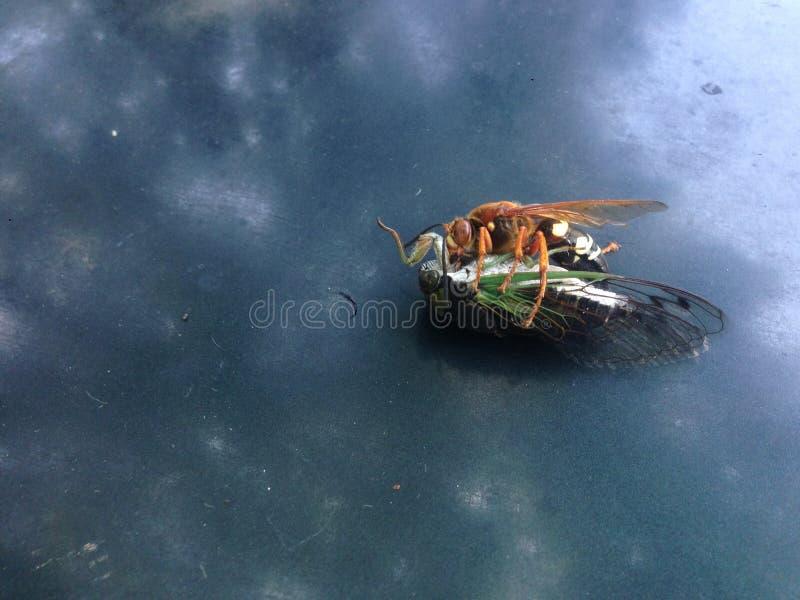 Dos insectos fotos de archivo