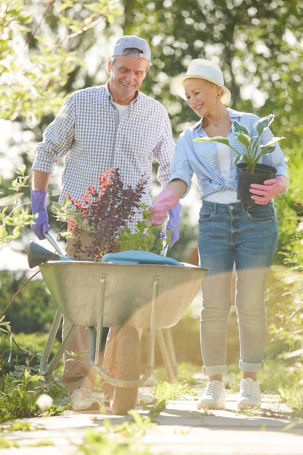Dos jardineros en luz del sol fotos de archivo