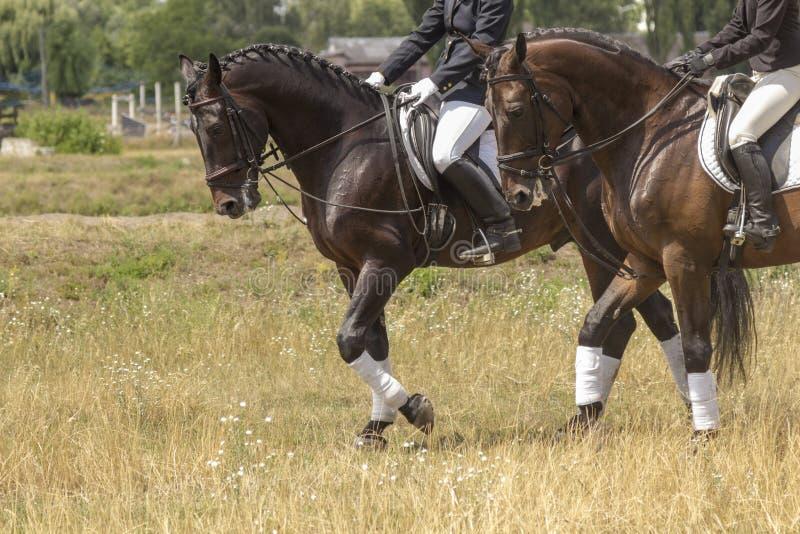 Dos jinetes en la silla, los caballos caminan sobre el césped, parte del marco imágenes de archivo libres de regalías