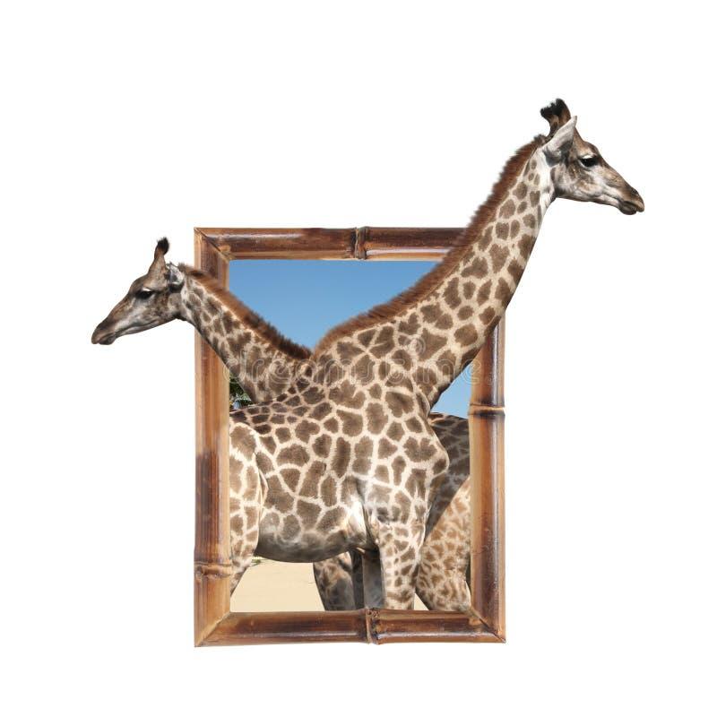 Dos jirafas en el marco de bambú con el efecto 3d fotos de archivo