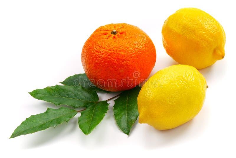 Dos limón y mandarina imágenes de archivo libres de regalías