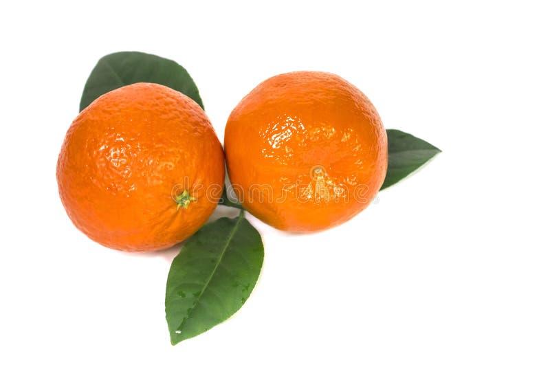 Dos mandarinas anaranjadas jugosas maduras con las hojas imágenes de archivo libres de regalías