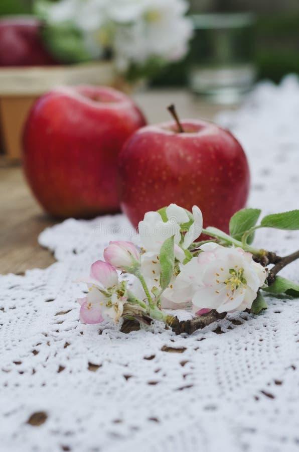 Dos manzanas y floraciones maduras de manzano imagenes de archivo