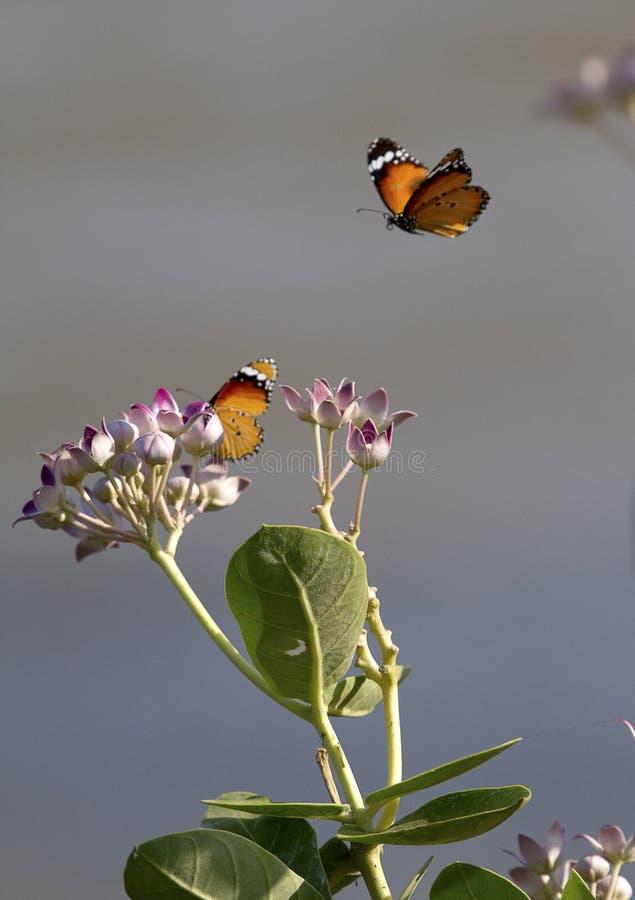 Dos mariposas y flores imagen de archivo
