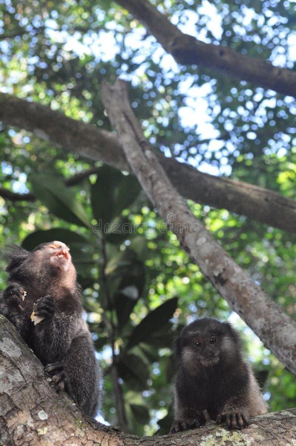 Dos monos en una isla imagen de archivo libre de regalías