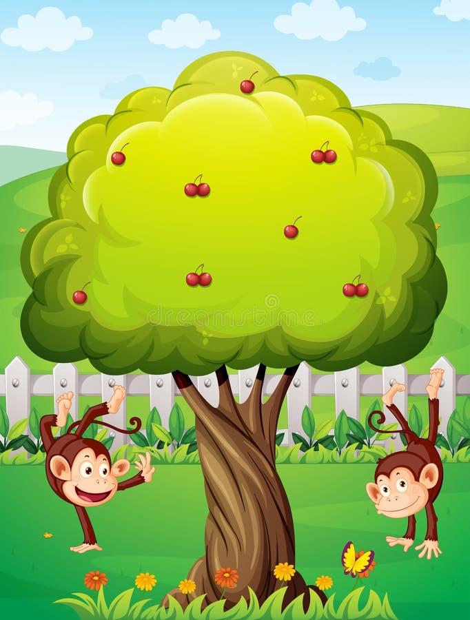 Dos monos que juegan en la yarda stock de ilustración