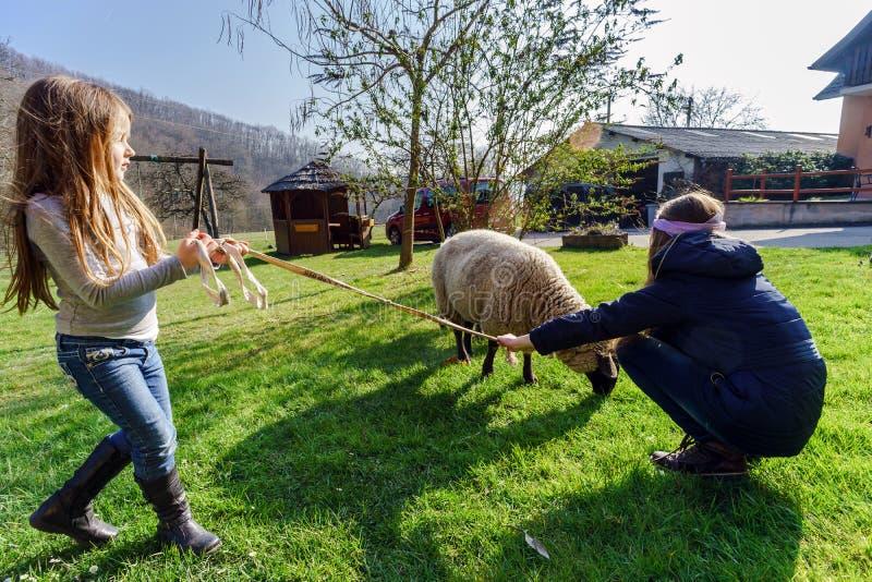 Dos muchachas que caminan con las ovejas de la granja imagenes de archivo