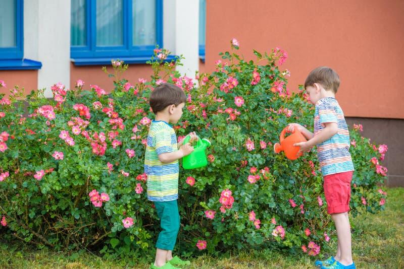 Dos muchachos del niño que riegan rosas con la poder en jardín Familia, jardín, cultivando un huerto, forma de vida imágenes de archivo libres de regalías