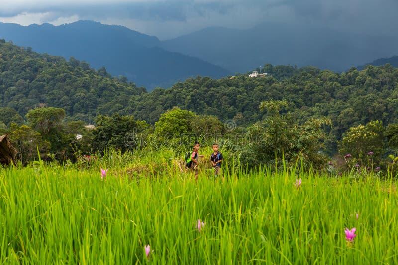 Dos muchachos en el jardín de flores de la montaña de lunes Chaem en Chiang Mai, fotos de archivo libres de regalías