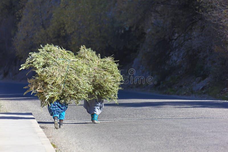 Dos mujeres del granjero que llevan una carga de ramas. fotografía de archivo libre de regalías
