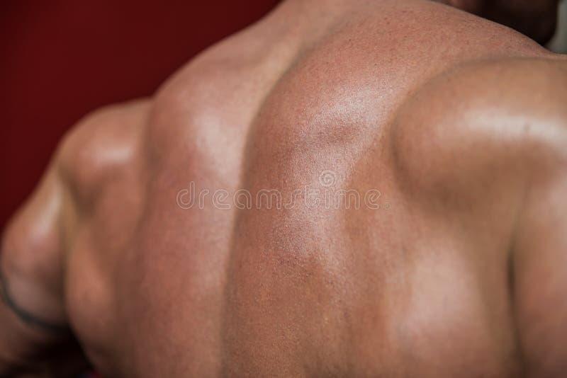 Dos musculaire photo libre de droits