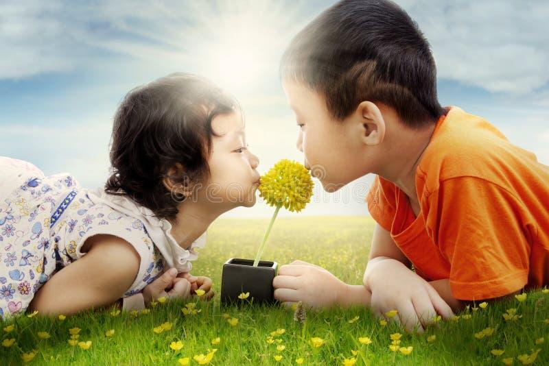 Dos niños lindos que besan la flor en el campo fotografía de archivo libre de regalías