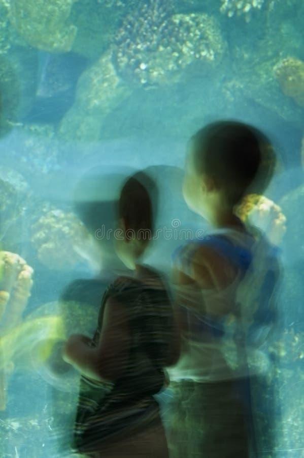 Dos niños pequeños en el acuario - falta de definición de movimiento imagen de archivo