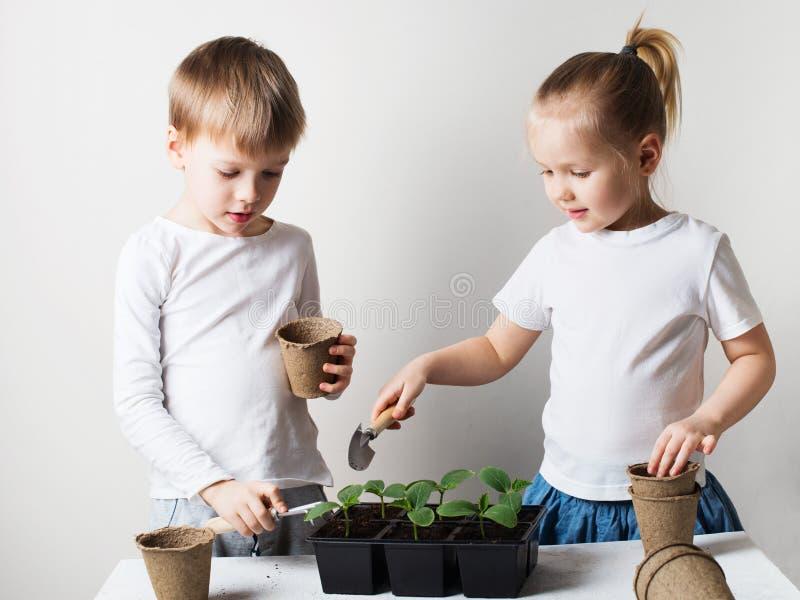 Dos niños sonrientes con tema de los brotes y de las herramientas que cultivan un huerto, de la ecología y del ambiente en el fon fotografía de archivo libre de regalías