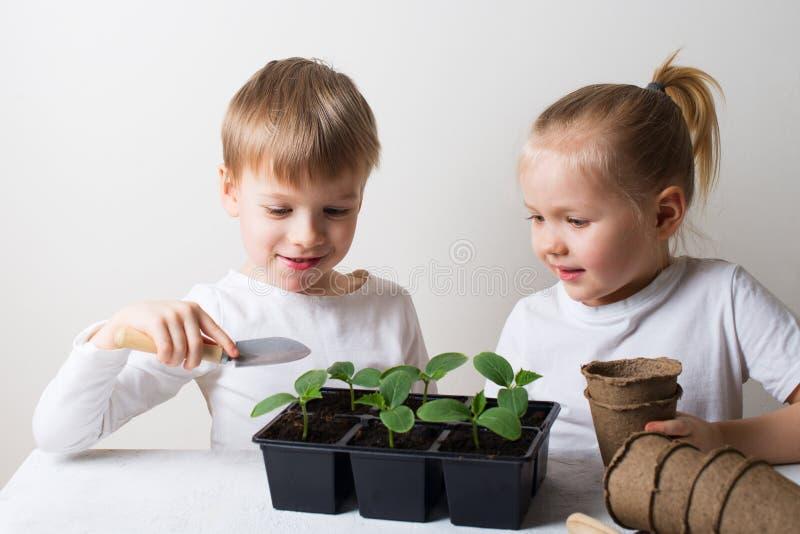 Dos niños sonrientes con tema de los brotes y de las herramientas que cultivan un huerto, de la ecología y del ambiente en el fon imagen de archivo libre de regalías