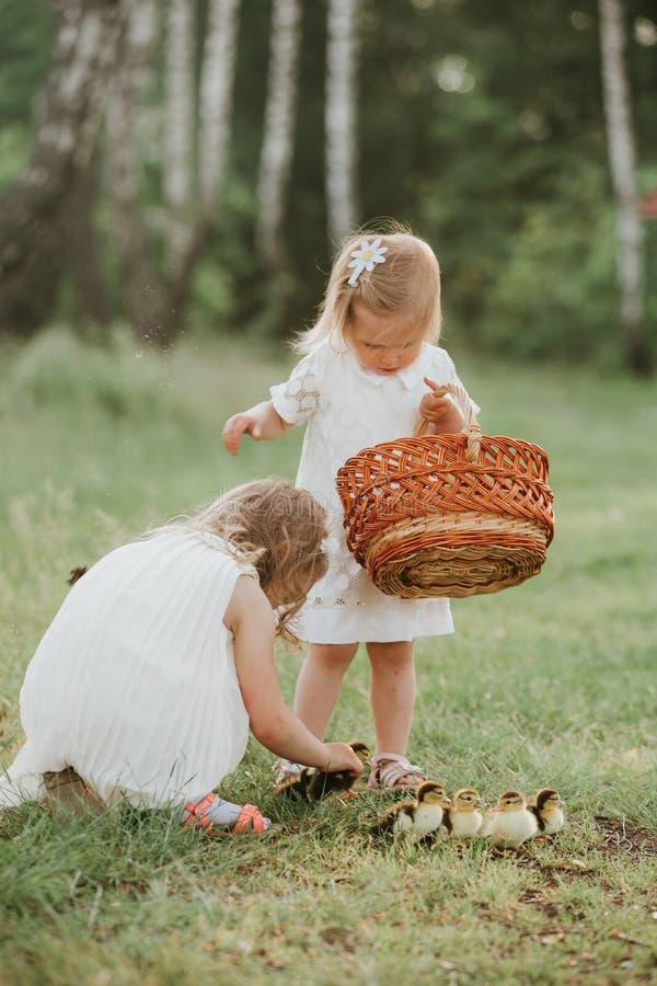 Dos ni?as en la puesta del sol con los anadones preciosos dos ni?as que juegan con los patos en el parque imagen de archivo libre de regalías