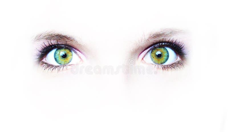 Dos ojos verdes imágenes de archivo libres de regalías