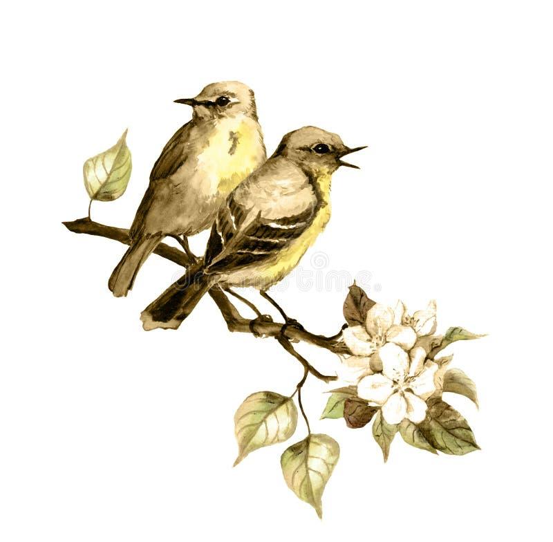 Dos pájaros de la canción el la primavera ramifican en color retro watercolor libre illustration