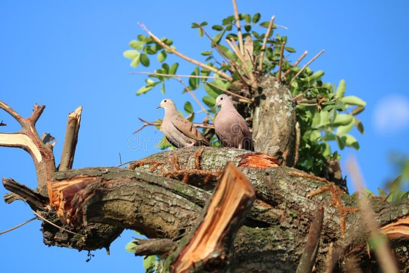 Dos pájaros en el árbol imágenes de archivo libres de regalías