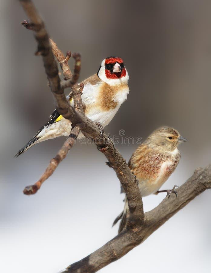 Dos pájaros hermosos imagen de archivo