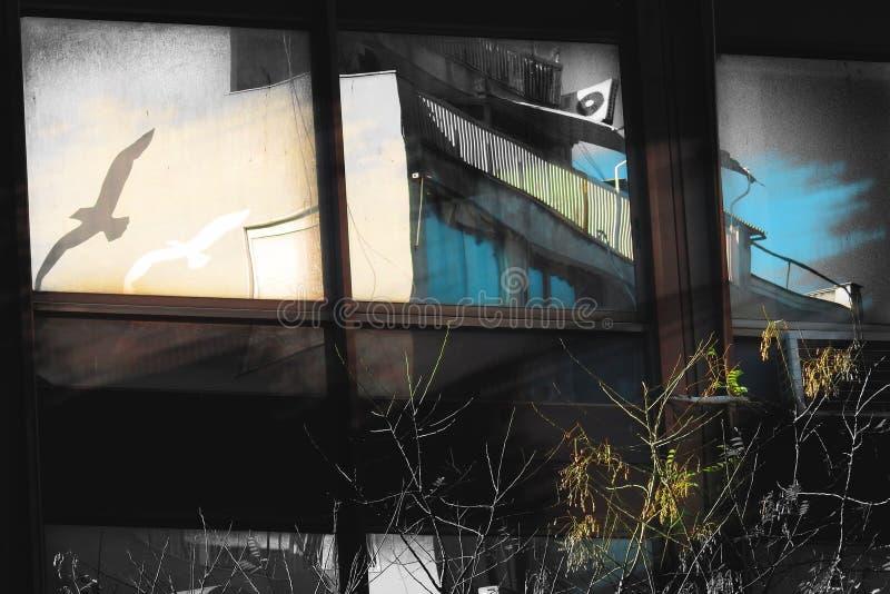 Dos pájaros vuelan, una composición artística fotos de archivo libres de regalías